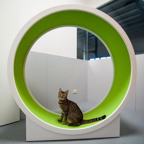 Rehabilitacyjne koło dla kota SimpleRun