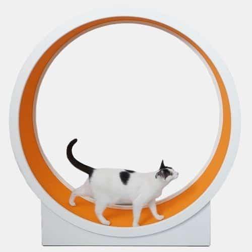 Kołowrotek dla kota simpleRun