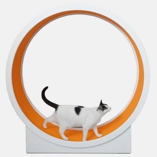 Bieżnia dla kota SimpleRun pomarańczowa