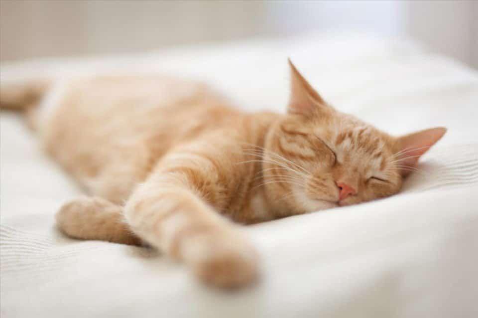 Rudy kot śpiący