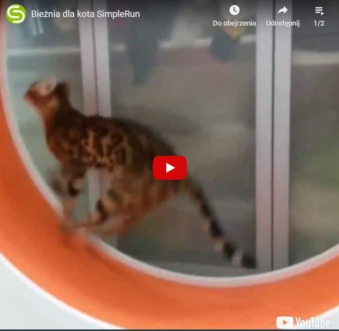 bieżnia dla kota SimpleRun jak kot biega