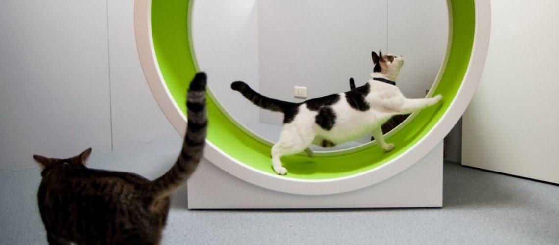 bieżnia dla kotów urządzenie rehabilitacyjne